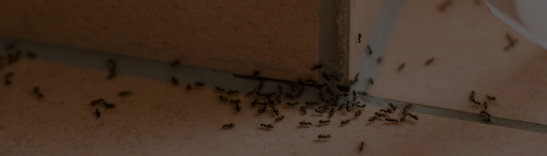 Remove Bugs From Your Home!